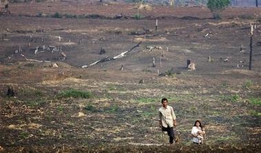 Deforestation+01+(AP).jpg